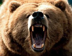 orso bruno trentino