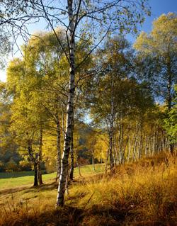 taleggio-autunno