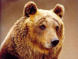 orso-Valtaleggio